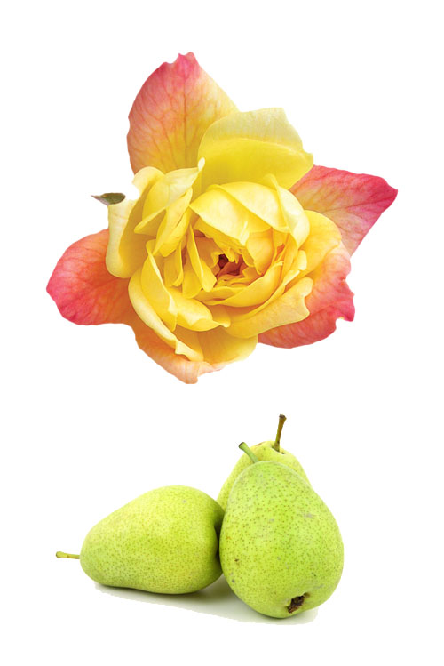 viognier-maremma-toscana-montedonico-terenzi-frutta