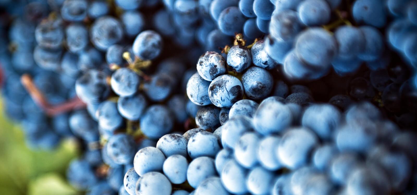 intro-territorio-terenzi-viticolori-scansano