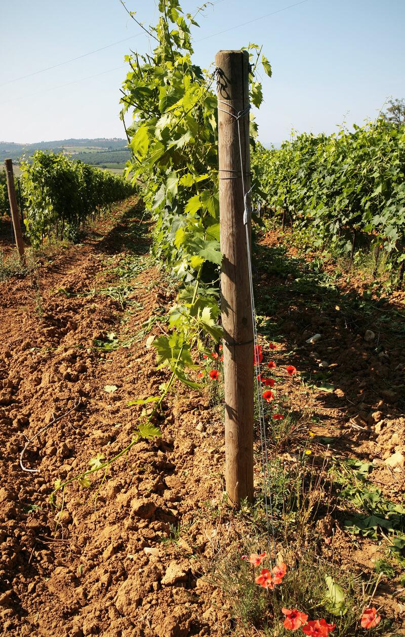prosuttori-vini-scansano-terenzi
