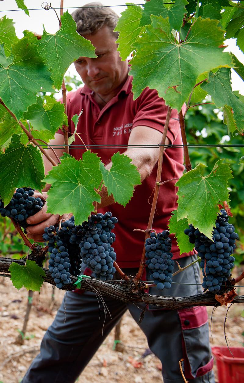 viticoltori-scansano-terenzi