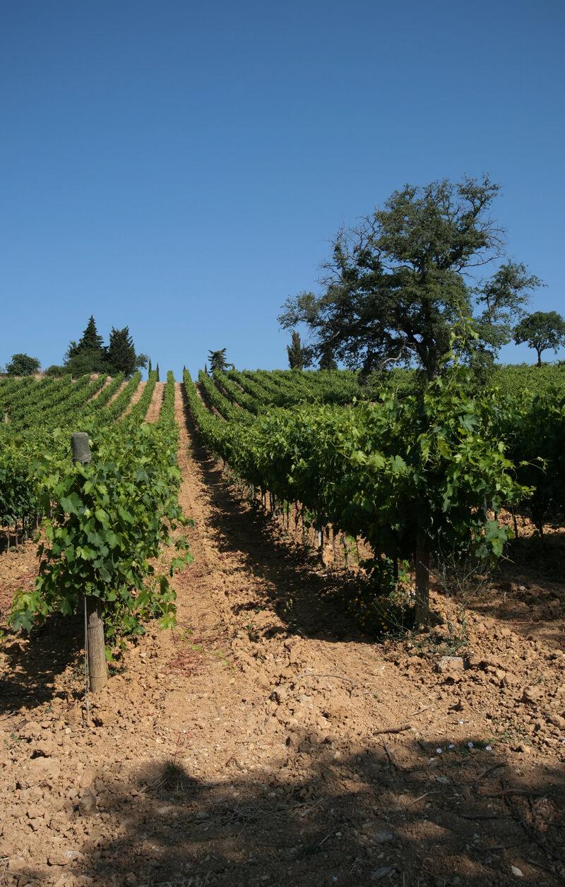 vini-terenzi-morellino-scansano