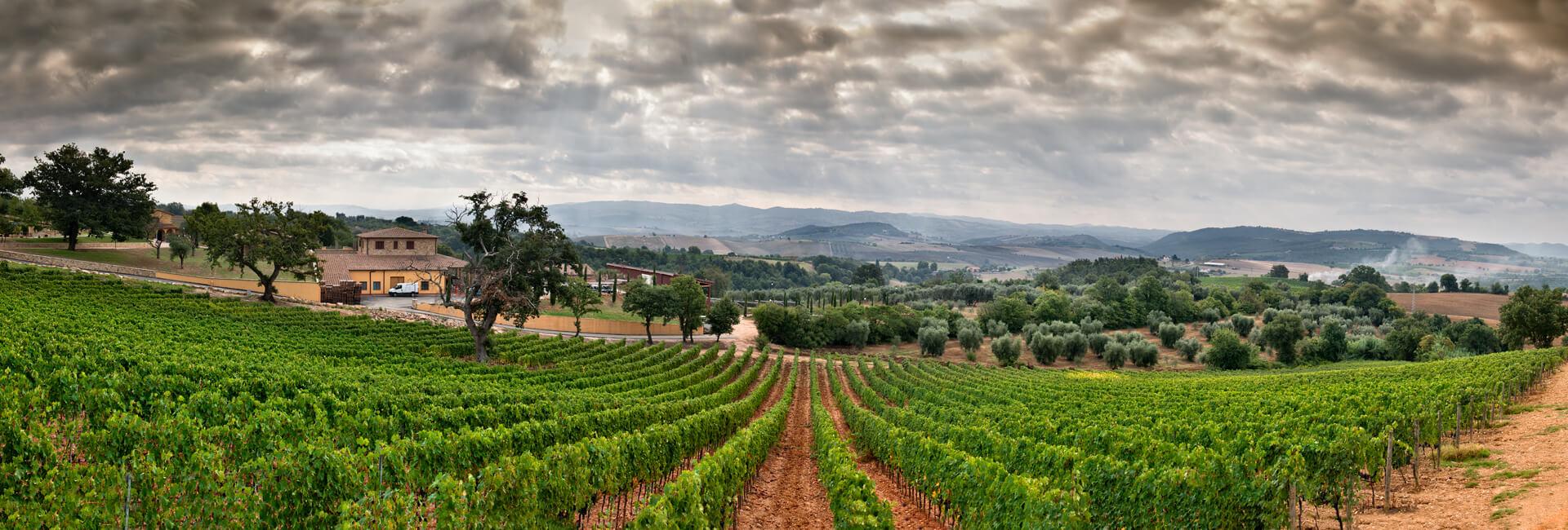 azienda-famiglia-terenzi-viticolori-scansano